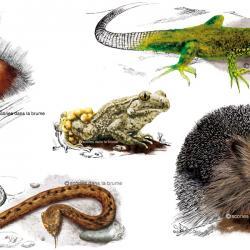 "Livret ""balade biodiversité"""
