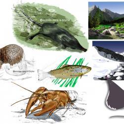 Animaux et paysages pour supports de communication (web, imprimés)