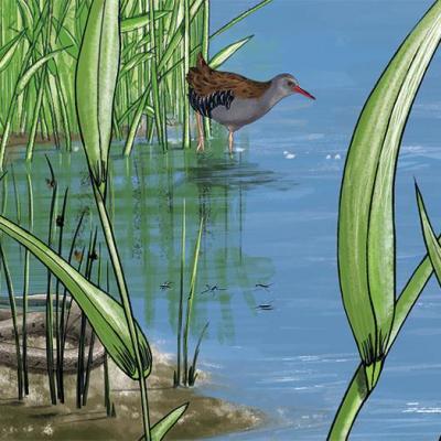 Fresque milieu humide detail