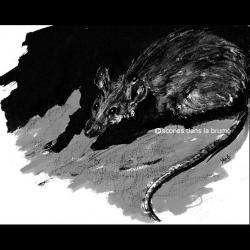 Rat, exposition