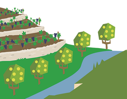 vigne vallee lot